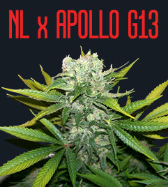 NL x Apollo G13
